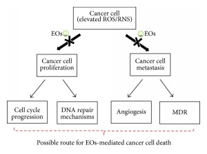 EO Cancer Research