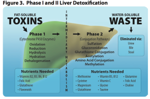 Phase l and ll Liver Detoxification