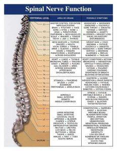 autonomic nervous sytem chart