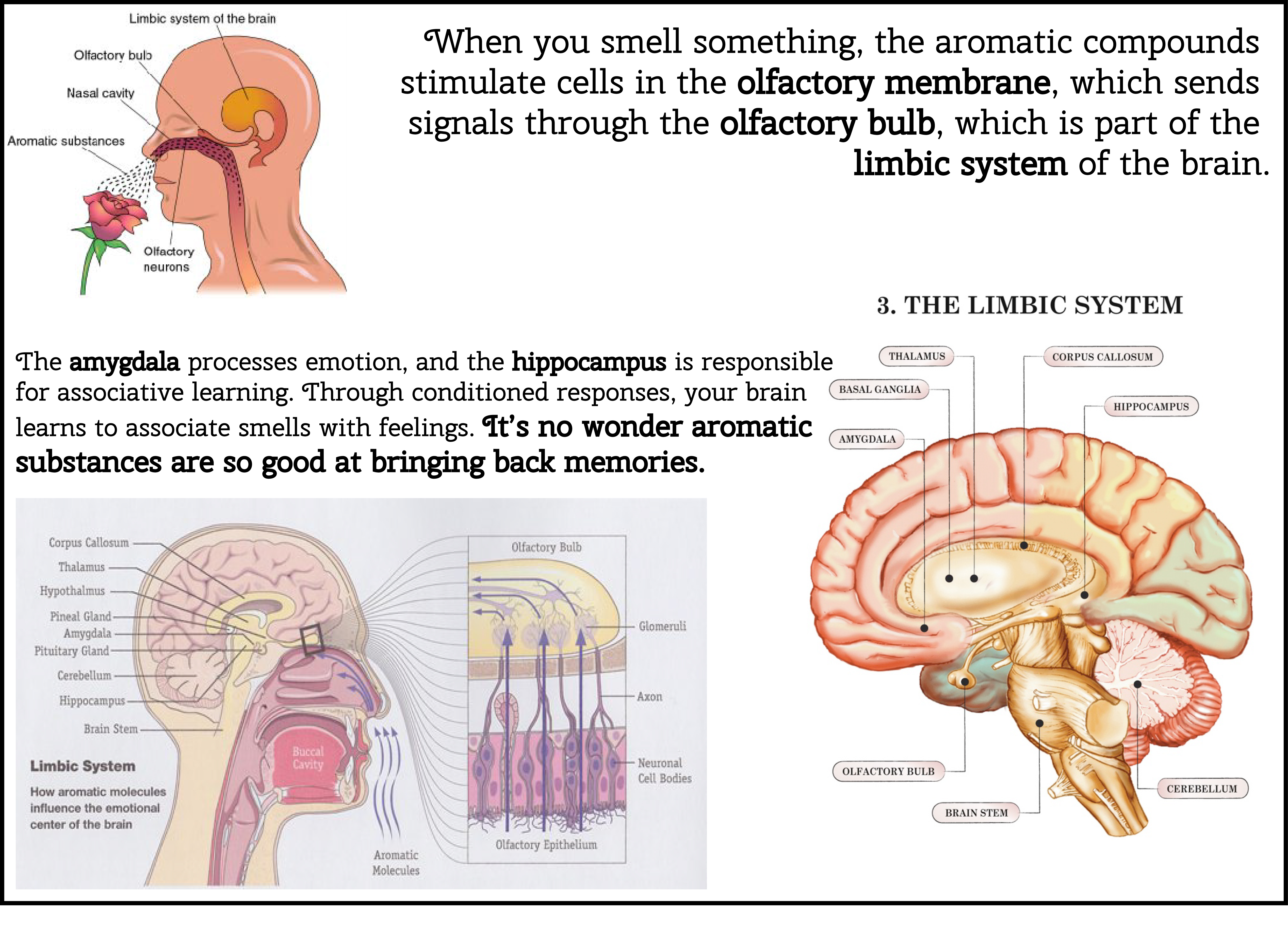 Ewe Whats That Smell Learn How To Restore Your Sense Of Smell To