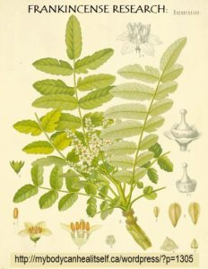 frankincense - research