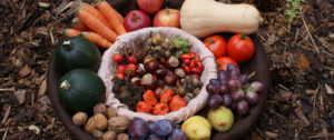 cropped-vegetable-basket1.jpg