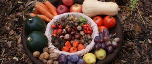 cropped-vegetable-basket1.jpg